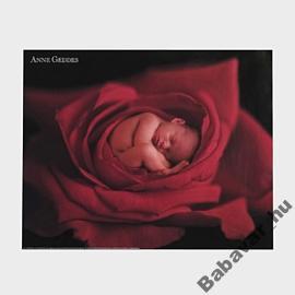 Anna Geddes poszter : Roze