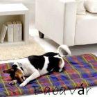Mintás kutya/cica fekhely 55x90 cm