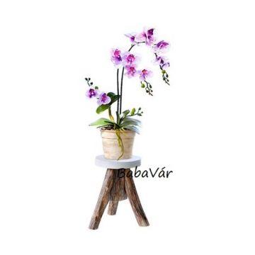 Cserepes nagy selyemvirág orchidea - élethű