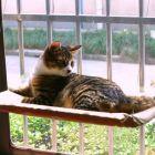 Panoráma cica kanapé/fekhely