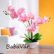 Cserepes selyemvirág orchidea