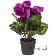 Selyemvirág orchidea kaspóban